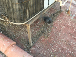 Pigeon Infested AC View 8