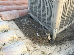Pigeon Infested AC View 6