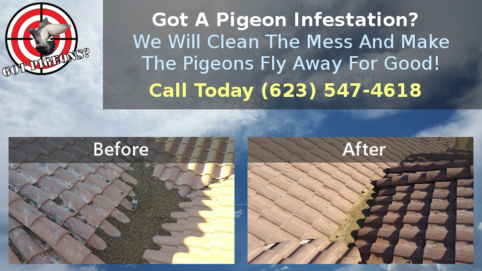 Pigeon Infestation Removal and Control